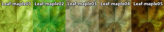 Example of leaf maps